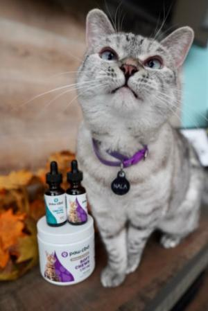 CBD Benefits for Cats